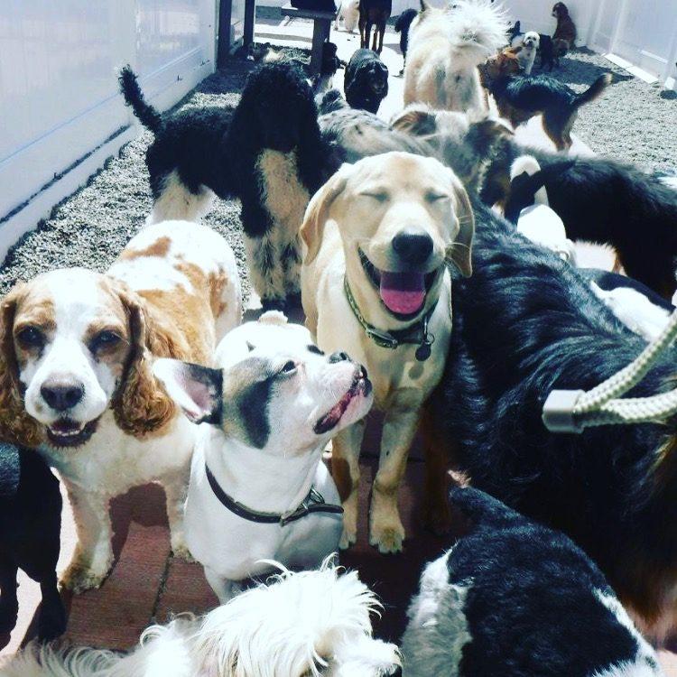 IMG_7407 Dog Daycare